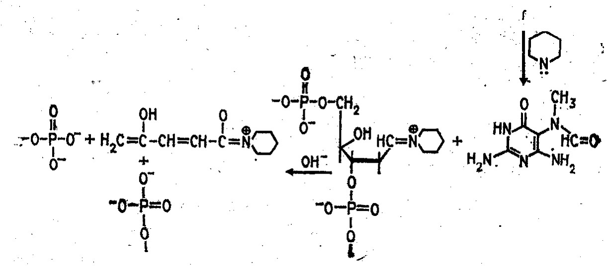 ферментативный метод определения холестерина в крови