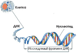 Генетическая история человечества