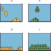 Социальное поведение нормальных клеток и антисоциальное поведение опухолевых клеток