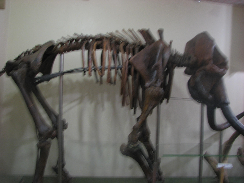 Черкаський обласний краєзнавчий музей