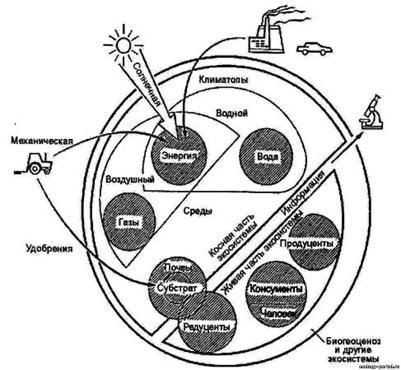 http://www.ecology-portal.ru/pictures02/1/jekologicheskie-komponenty.jpg