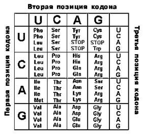 Универсальный генетический код