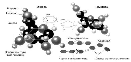 Схема образования глюкозы в процессе пищеварения