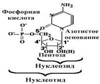 Мономер нуклеиновой кислоты