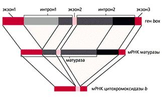 DYMSHIC5.gif (14150 bytes)