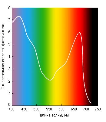 Интенсивность фотосинтеза на различных длинах волн