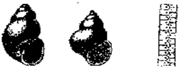 Описание: C:\Users\Настена\Desktop\61.gif