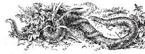 Геофил длинный, напавший на дождевого червя