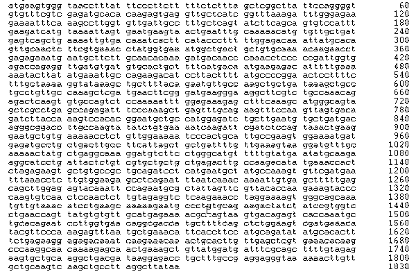 Рис. 5. Нуклеотидная последовательность гена, кодирующего сывороточный альбумин человека