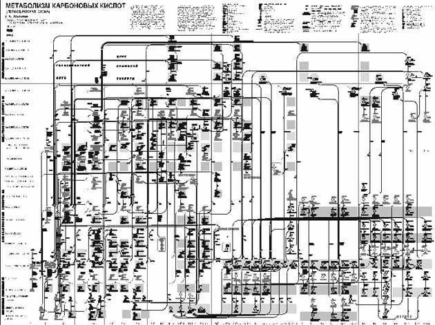 Рис. 17. Общие контуры карты метаболизма карбоновых кислот (12)