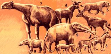 Третичные млекопитающие